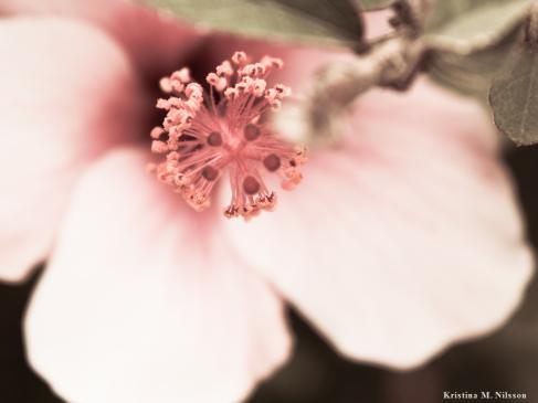 En rosa blomma