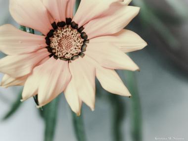 Blomma =)