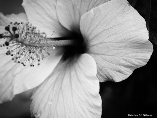 Blomma i svartvit =)