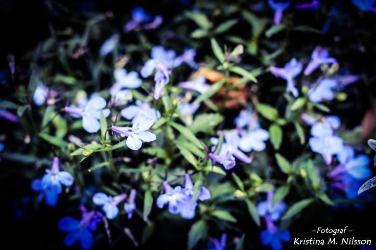 IMG_4530_edited